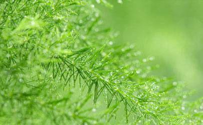 2021雨水节气应该吃什么 二十四节气雨水食谱