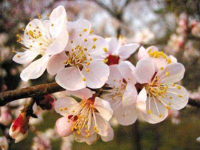 src=http___hkpic.crntt.com_upload_201403_21_103086532.jpg&refer=http___hkpic.crntt