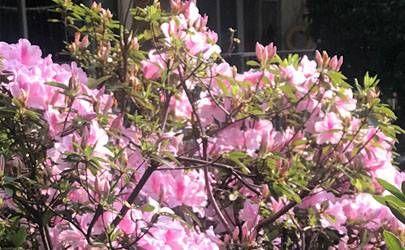 造成桃花劫的七种生活风水细节