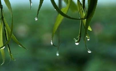 关于雨水节气的说法,这些风俗你都知道吗?