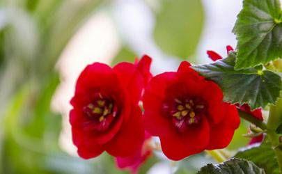 庚子年是大灾之年?双春年不宜结婚,完全对称日是什么?