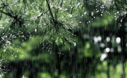 家里种榕树好吗?养榕树盆栽有哪些风水禁忌呢?